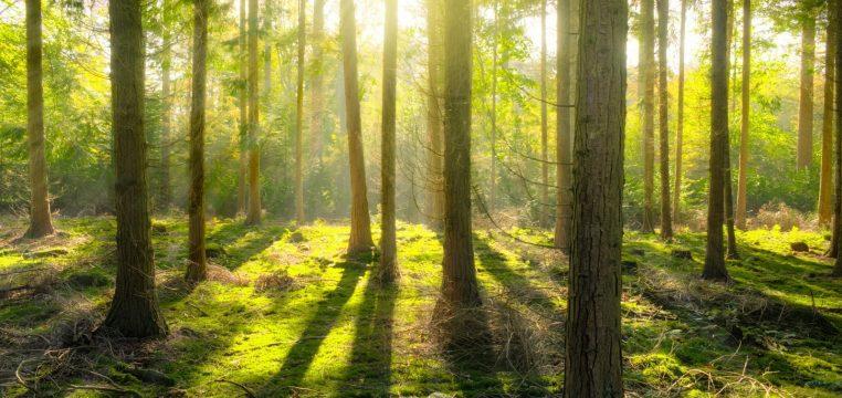 strateginiai miško variantai)