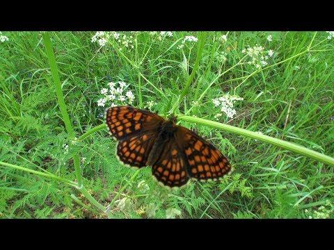 drugelių fiksuotų pajamų prekybos strategijos