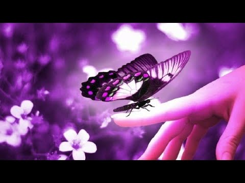 drugelio parinkčių vaizdo įrašas)